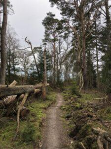 Modul 5 - Sanseligt nærvær og skovbadning