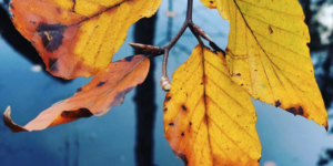 Sanselige efterår